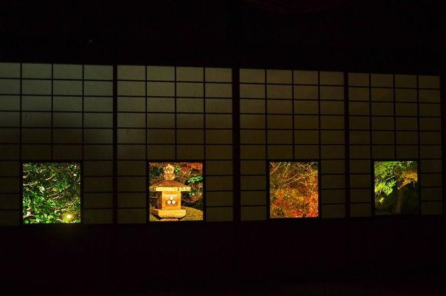 そうだ京都、行こう。 雲龍院 紅葉 紅葉🍁 ライトアップ 色紙の景色 左から「椿」 「灯篭」「楓」「松」Unryuin Autumn Leaves Autumn🍁🍁🍁 Beauty In Nature Nature Photography Nature Collection Nature