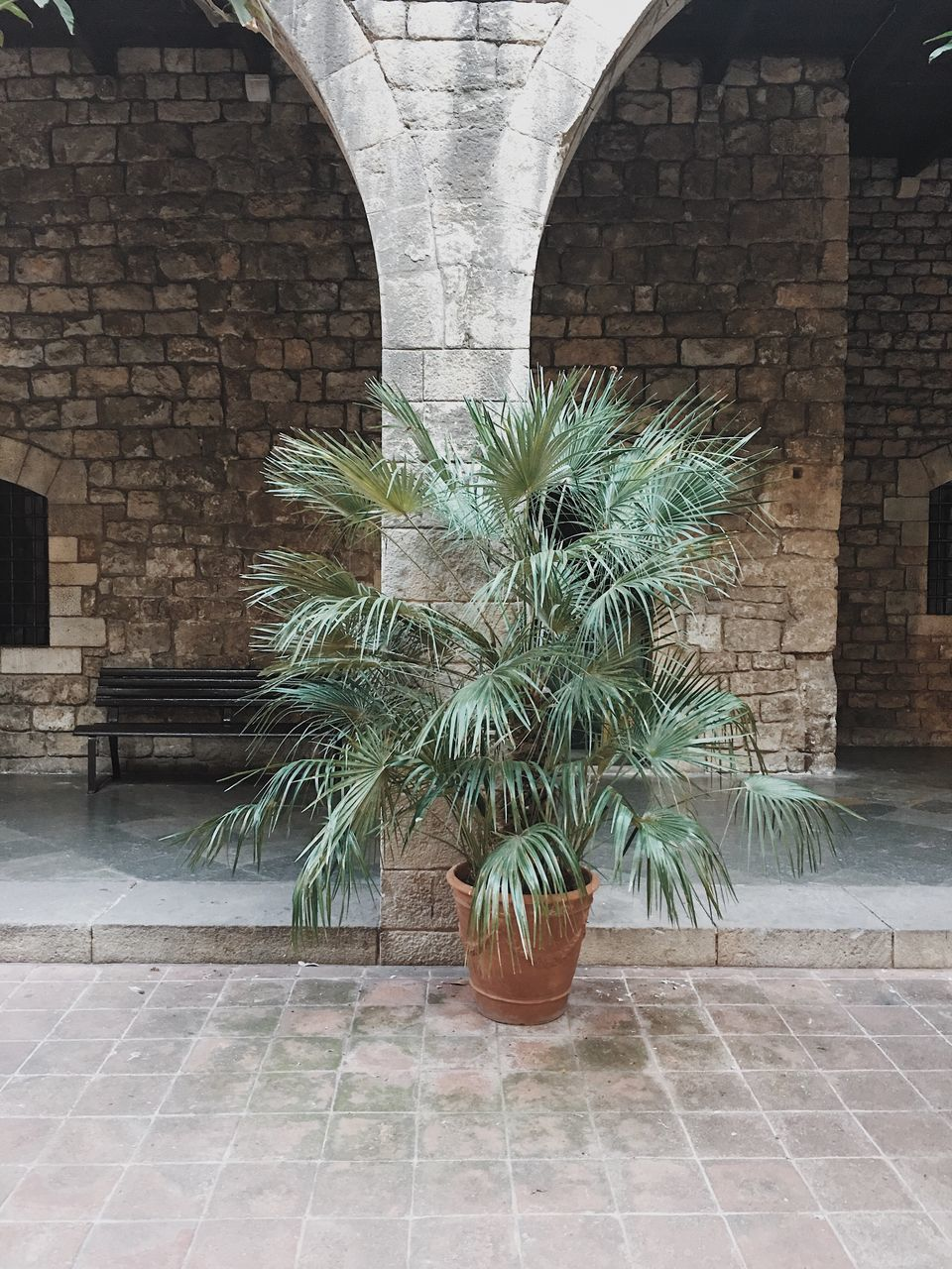 potted plant, plant, growth, architecture, no people, day, nature, outdoors