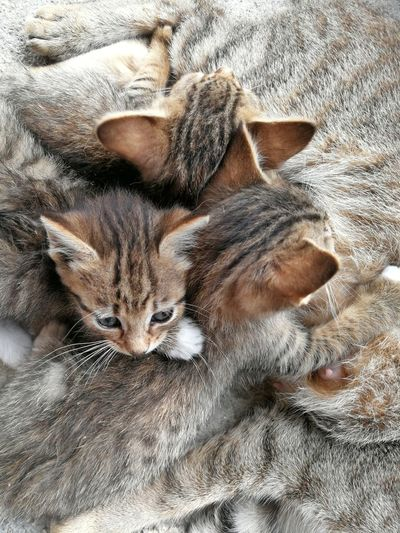 Kitten Pets Bed Home Interior Cute High Angle View Close-up Kitten Cat Young Animal Stray Animal Domestic Animals Domestic Cat Feline