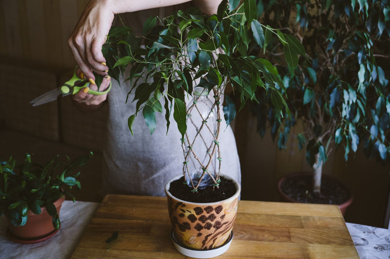 Midsection of woman gardening at table