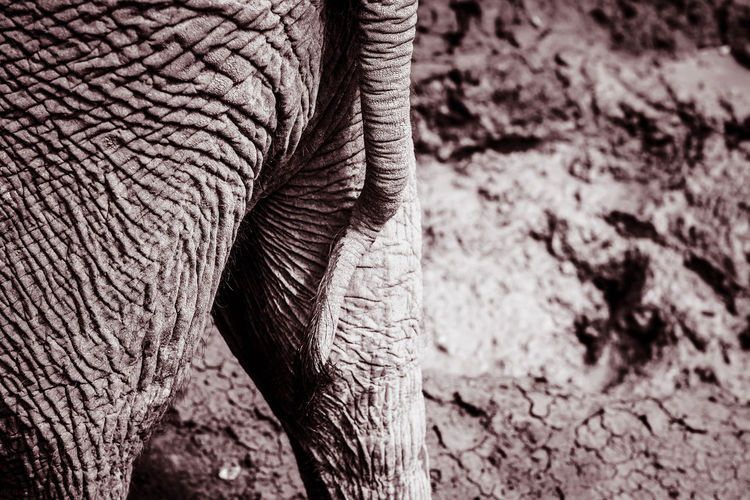 Desert Drought Textured  African Elephant Animal Themes Animal Wildlife Animals In The Wild Black And White Close Up Day Elephant Elephant Close Up Elephant Skin Elephant Tale High Contrast Intense Mammal Monochrome Nature No People Outdoors Safari Safari Animals Talent Texture An Eye For Travel EyeEmNewHere