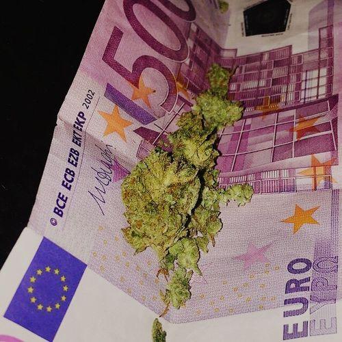 High Society in Amsterdam Amsterdam 420 Weedaddicted Smokeweedeveryday Iamsterdam Grashoppers Ganja Ganja Love WeedPorn