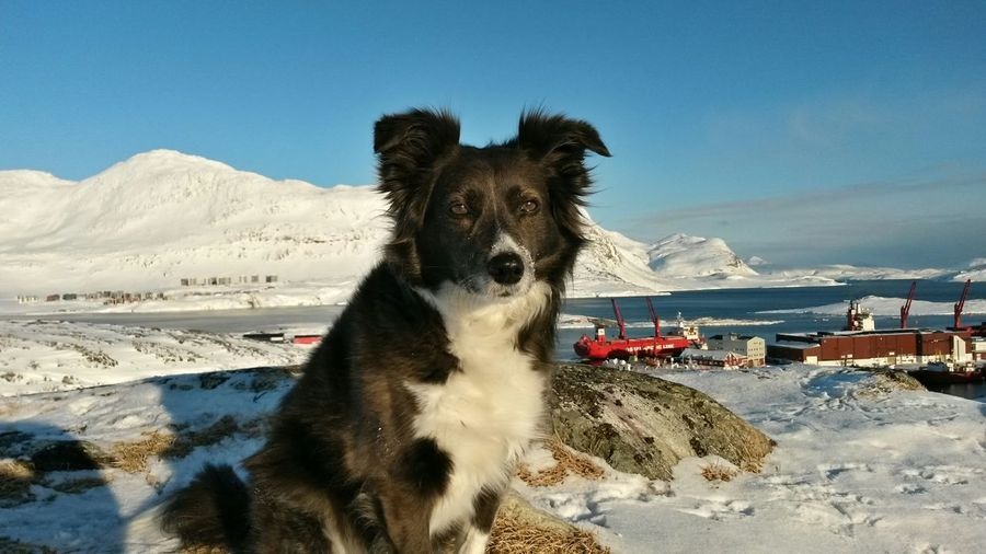 Close-Up Of Dog With Mountain In Background