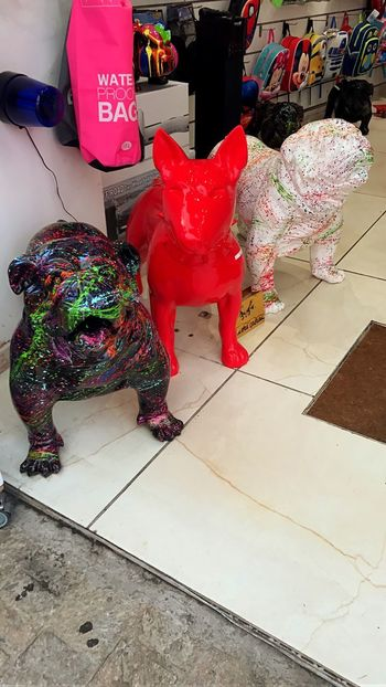 Superdog Text Indoors  Celebration Multi Colored Day No People