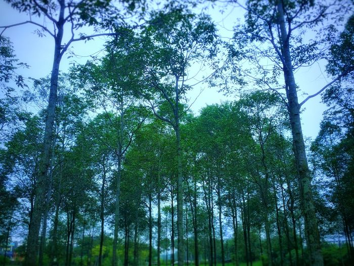 Trees Green Greenery View Garden Ruleofodds Rule Of Odds Tree Forest Branch Tree Area Sky Green Color Treetop WoodLand Tree Canopy  Flora Holiday Moments
