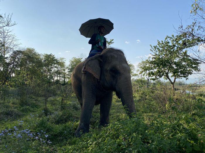 Elephant riding horse on field against sky