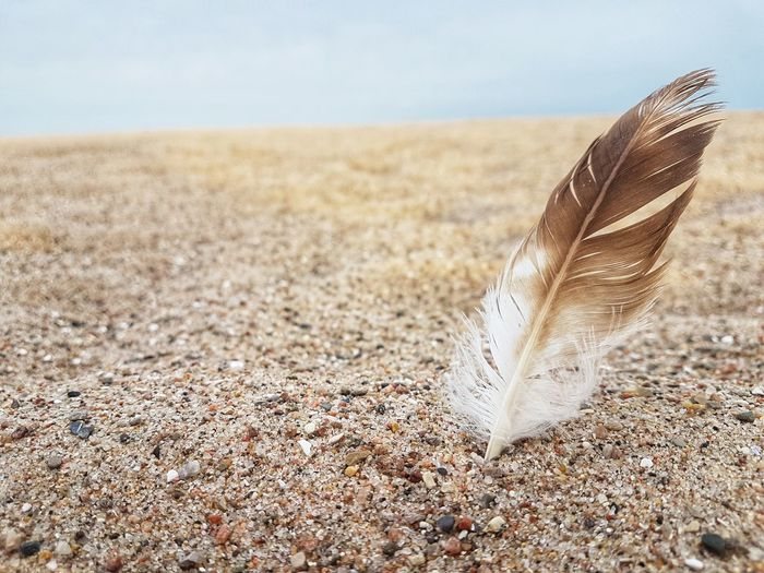 feather in sand Beach Feather  Sky Feel Free Relax Beachlife Baltic Sea Waves Blue Sky Water Autumn Sand Dune Sea Sky Landscape Sandy Beach Summer In The City EyeEmNewHere My Best Travel Photo This Is Strength 50 Ways Of Seeing: Gratitude Holiday Moments My Best Photo 17.62°