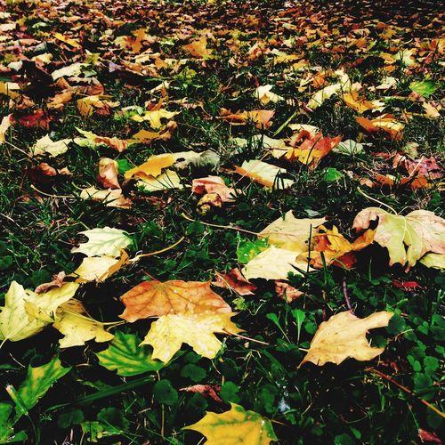 Обожаю осень! Это самое красивое время года👌 осень прекрасна 🌾🍂🍃 Autumn листья желтые