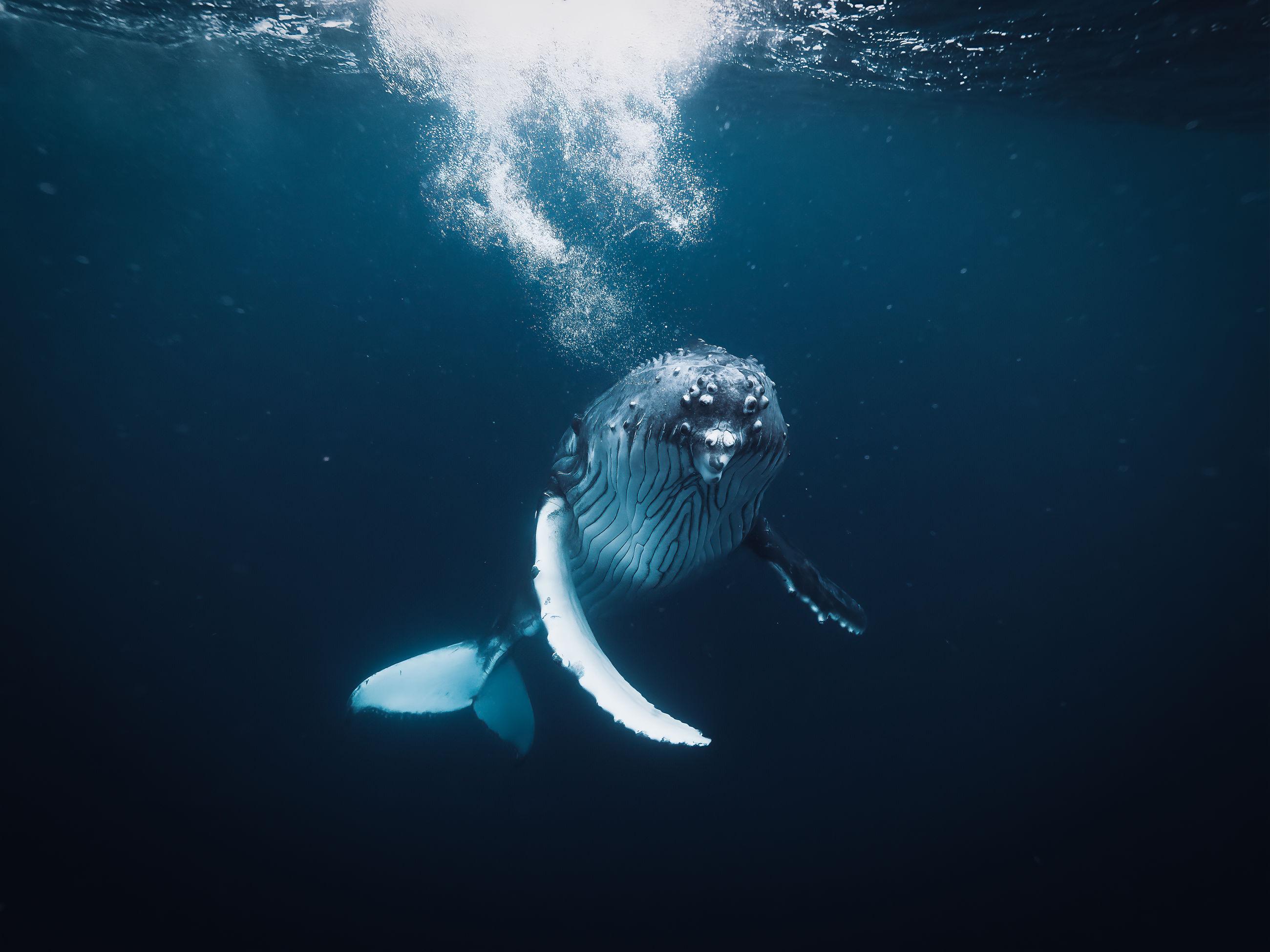 water, animal wildlife, swimming, underwater, animal, sea, animal themes, animals in the wild, one animal, undersea, vertebrate, sea life, marine, nature, no people, fish, outdoors, mammal, day