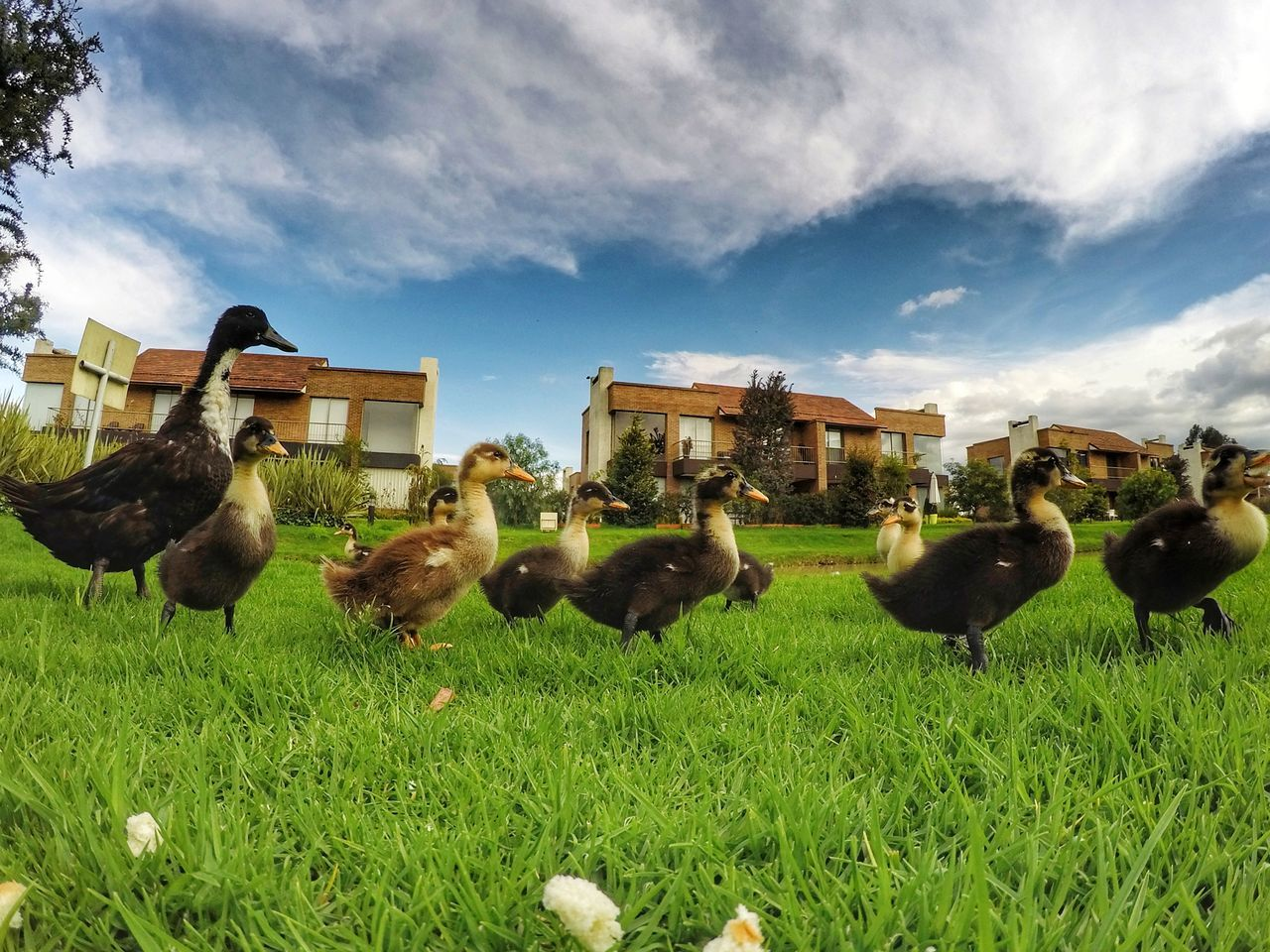 grass, sky, animal themes, field, bird, outdoors, nature, cloud - sky, day, large group of animals, building exterior, architecture, no people, animals in the wild