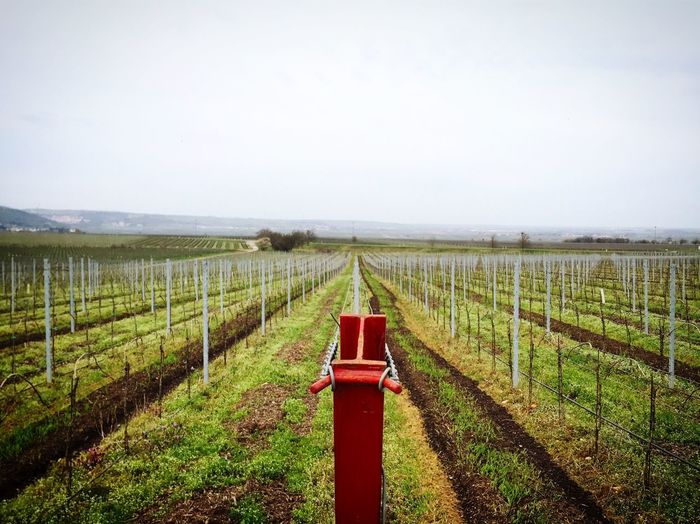 Tranquil rural scene with vineyard in springtime