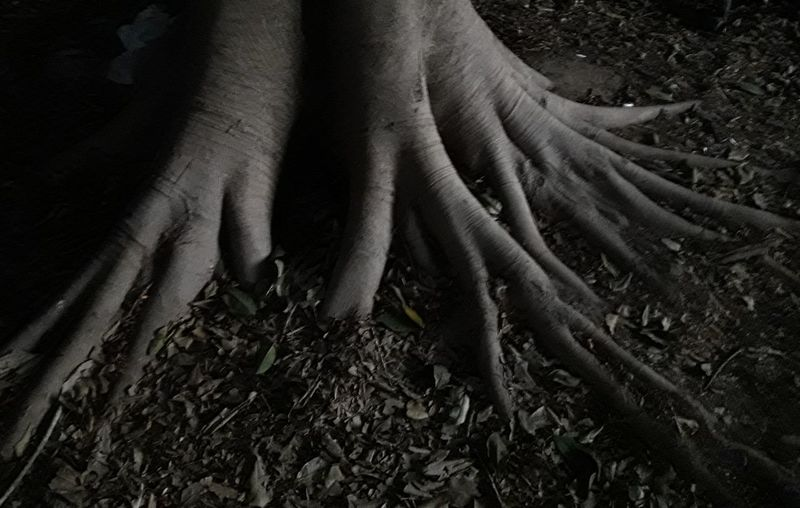 High angle view of hands in forest