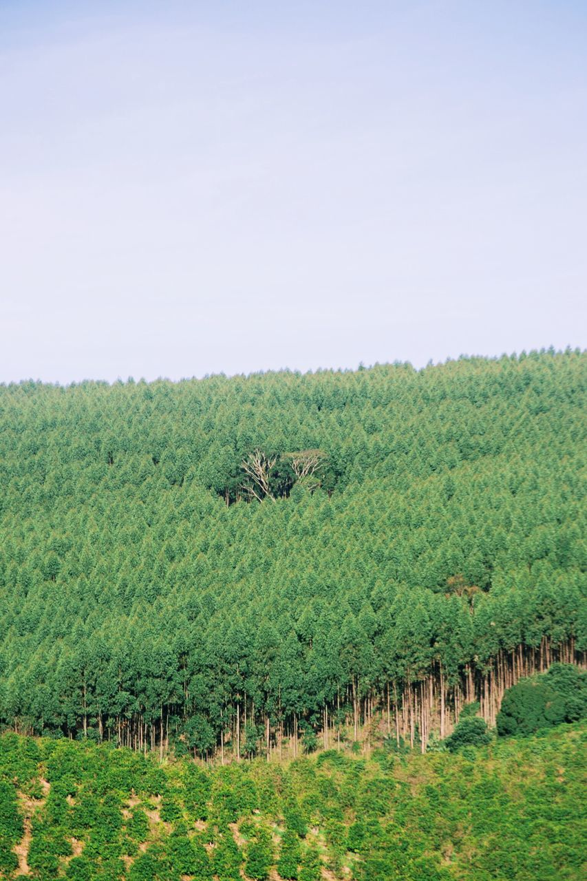 Trees Growing On Field Against Clear Sky