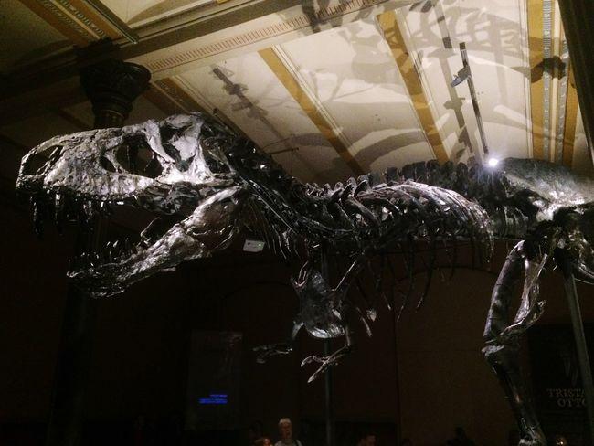 Dinosaur TRex  Tristan Museum