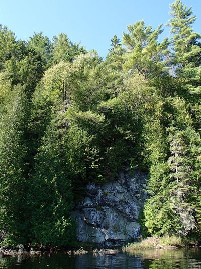 Forêt mixte laurentienne - Laurentian Mixed Forest (Lac Jackson) Tree Plant Water Growth Beauty In Nature Nature Green Color Outdoors