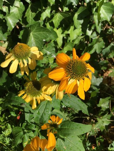 Flower Flowering Plant Growth Plant Flower Head Fragility Vulnerability