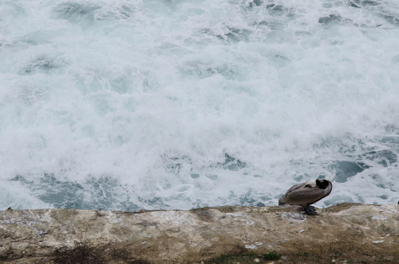 View of a bird in the sea