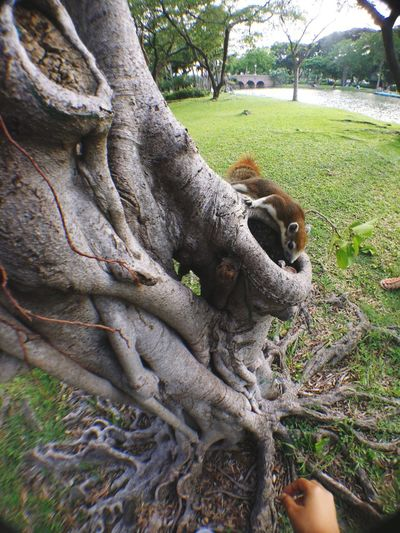 View of tree trunk