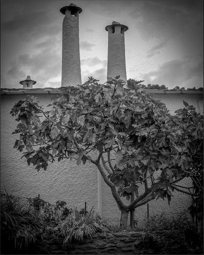 #bnw_ignafotos Granada, Spain EyeEm Selects #bnw_ignafotos Bnw_friday_eyeemchallenge #nature_collection #EyeEmNaturelover #nature Bnw_collection Bubion Arquitecture EyeNemBlackandWhite Eyeemphotography Eye4photography  Photography EyeEm Gallery Blackandwhite Arquitecturas EyeEmNewHere #ignafotos Tree City Cityscape History Monument Ancient Tower Old Ruin Memorial Sky