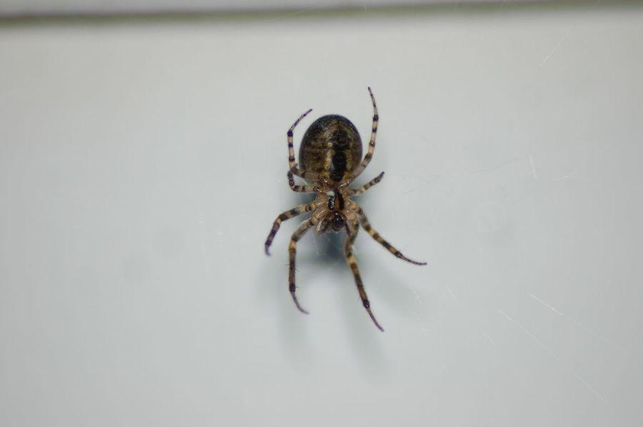 Macro Photography Macro Insects Macro Spider Macro_collection