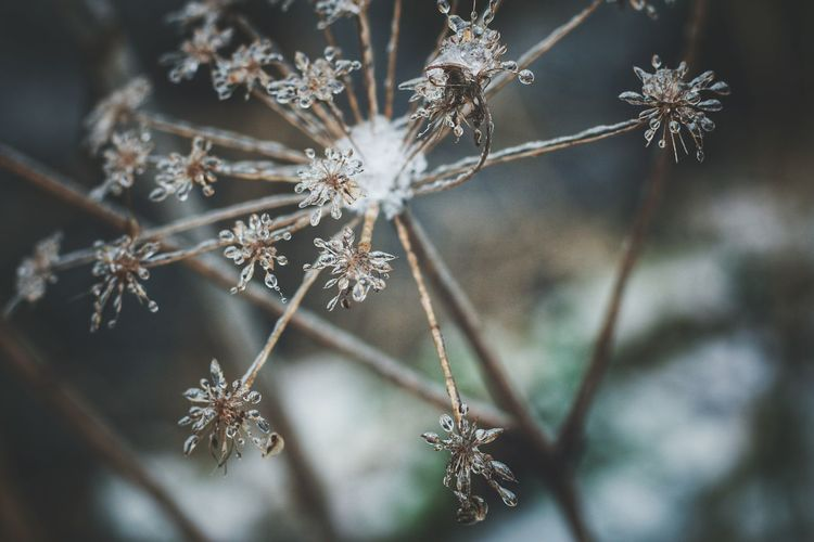 Frozen.. Winter Close-up Nature Snowflake No People Frozen Outdoors Plant Beauty In Nature Cold Temperature Ice Nature_ Collection  Forest Life Nature_ Collection  Nature_ Collection  EyeEm Vision Nature_ Collection  EyeEm Nature Lover Eyeemphotography EyeEm Gallery Streamzoofamily EyeEmBestPics