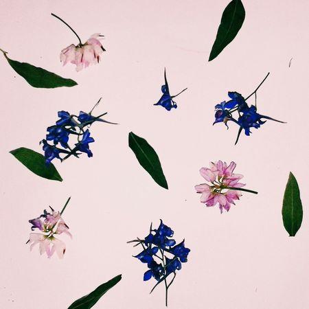 цветы🌸🌼🌻💐🌾🌿 листья лепестки краски  Relaxing вечер гербарий