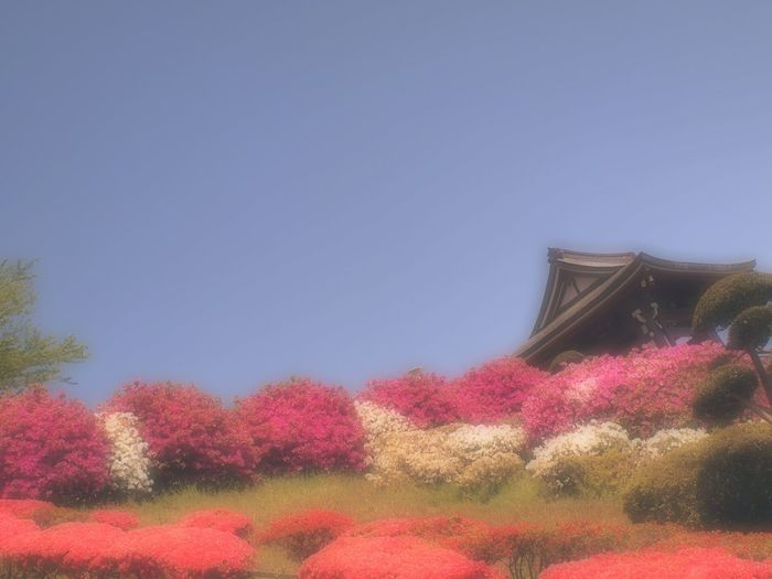 Flowers ASIA EyeEm Nature Lover Japan Japanese Temple Fields And Sky つつじ Bluesky