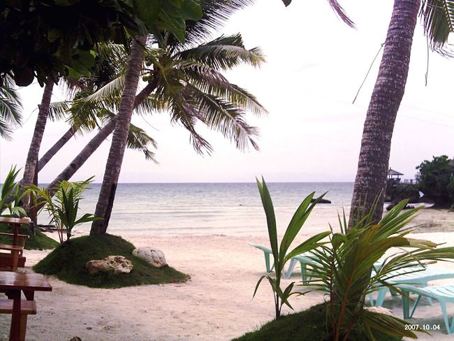 Beach Photography White Sand Beach Beach View Palm Tree Palm Trees Palms By The Ocean White Sands Beach Huts At The Beach Beach Beaches Coconut Trees Coconut Trees And Beaches Coconut Trees By The Beach