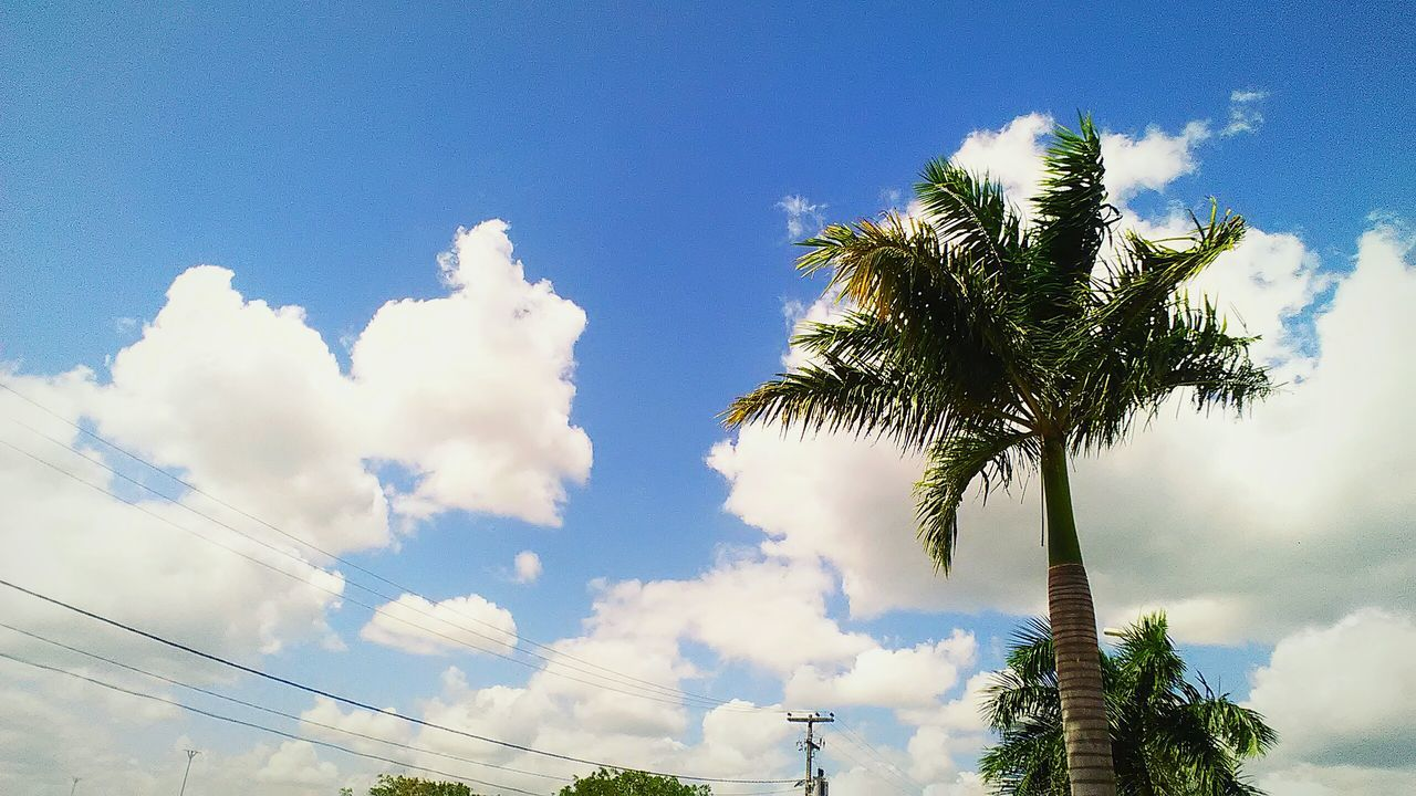 sky, low angle view, palm tree, tree, cloud - sky, nature, beauty in nature, no people, day, scenics, growth, outdoors, blue
