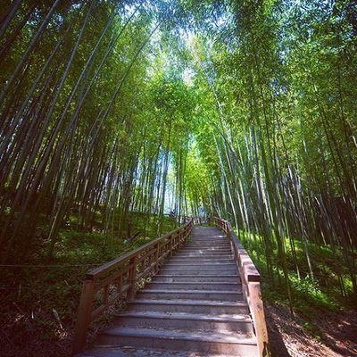 담양 죽녹원 39도 여행 Photographer_suhyeon Travel Nikond610 니콘D610 풍경 대나무