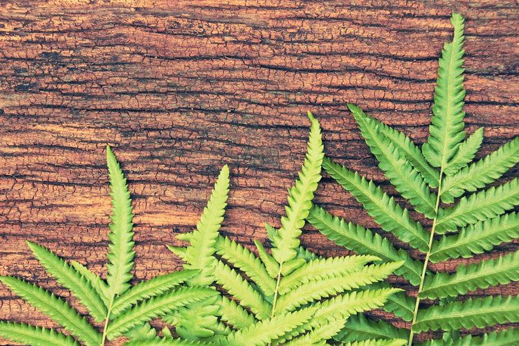 Bangkok Thailand. Macro Photography Thailand Photos Wood Background Backgrounds Beauty In Nature Cannabis Plant Close-up Day Ferns Fragility Freshness Green Color Growth Leaf Nature No People Outdoors Plant Thailand_allshots Wood - Material Wood Texture Wooden