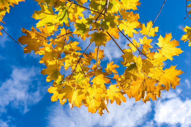Autumn Beauty In Nature Blue Branch Change Close-up Cloud - Sky Day Flower Fragility Freshness Growth Leaf Low Angle View Nature No People Outdoors Sky Tree Yellow