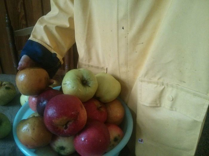 I went Picking Applesin my yellow Raincoat . Apples Rainyautumn