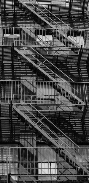 Animals Architecture Bird Day Nature Staircase Steps Steps And Staircases The Street Photographer - 2017 EyeEm Awards