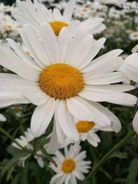 Flowers,Plants & Garden Flowers White Flower