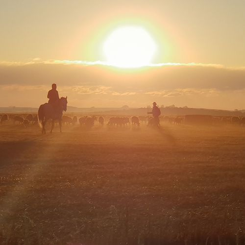 Men with animals on field against sky during sunset
