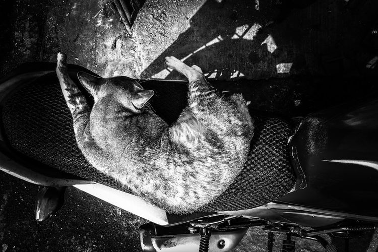 Cats on my way Streetphotography Cats Cat♡ Cat Lovers Cat Catsagram Cats Of EyeEm Cats 🐱 Catlovers Catoftheday