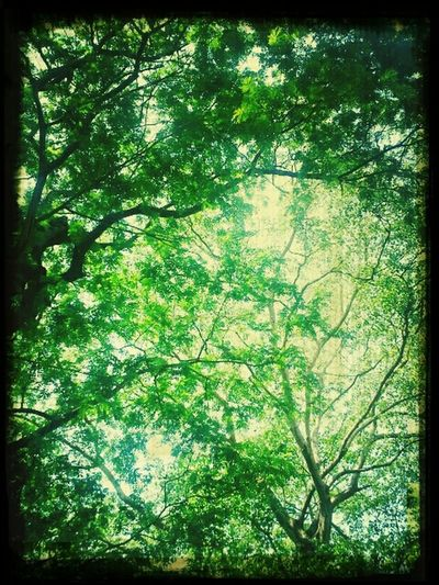 can't even see the sky. .full of green leaves.!!! @$ $$ :-) Enjoying Life Hanging Out