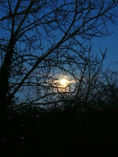 moon Tree Bare Tree Nature Silhouette Beauty In Nature Low Angle View Branch