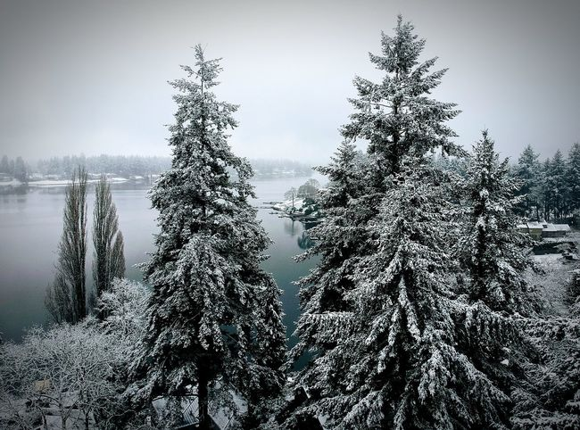 Christmas Snow EyeEmNewHere Fir Trees Dji Nature No People Day Outdoors Sky Beauty In Nature Lake Snow Winter