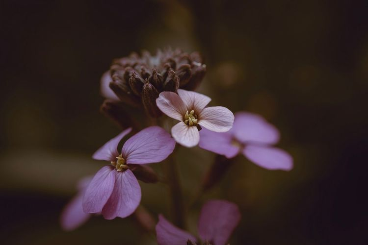 Floral beauty Flowering Plant Flower Plant Petal Fragility Beauty In Nature Freshness Vulnerability  Flower Head Inflorescence Growth Close-up Focus On Foreground No People Nature Selective Focus Pollen Outdoors Day Botany