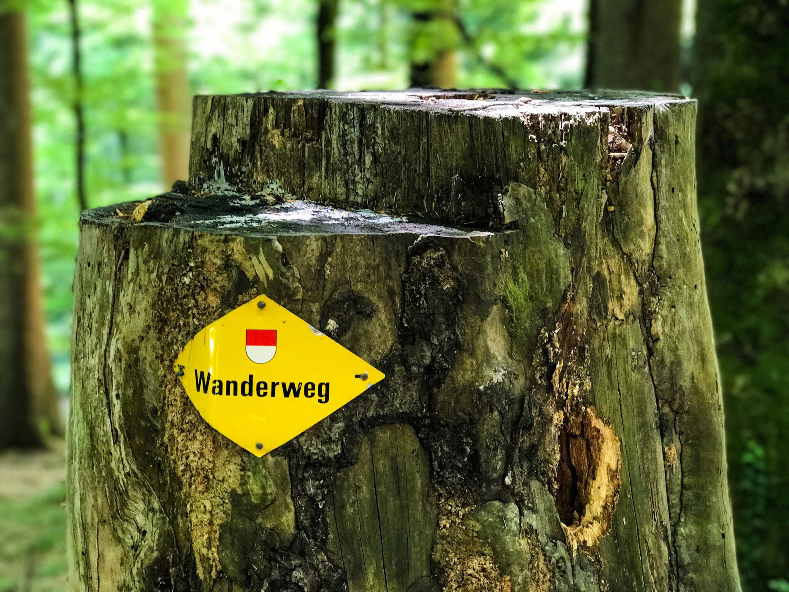tree trunk, tree, text, yellow, day, communication, focus on foreground, textured, warning sign, no people, wood - material, outdoors, close-up, nature
