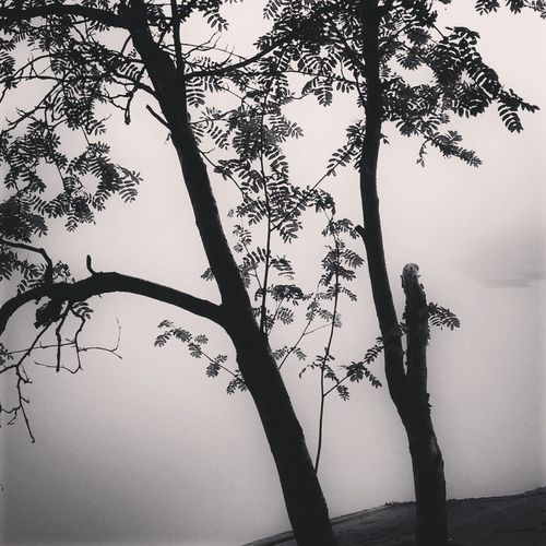 Trees Bw_trees Bw_collection MADE IN SWEDEN Foggy Morning Shootermag Tree_collection