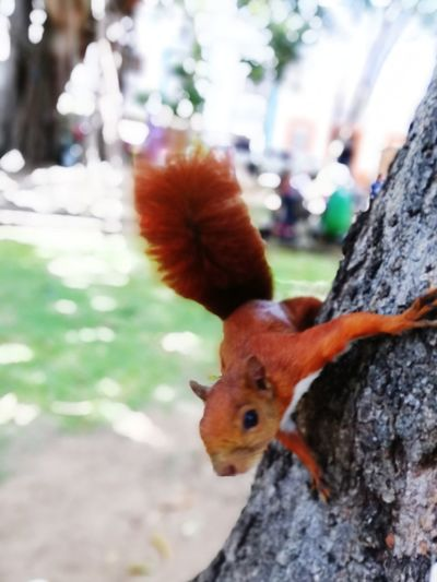 Cute Tree Bird Portrait Looking At Camera Tree Trunk Close-up Squirrel Rodent Tail Livestock