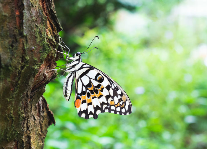 Butterfly on a tree Animals In The Wild Animal Themes Animal Wildlife Insect One Animal Animal Butterfly - Insect Tree Beauty In Nature Plant Animal Wing Tree Trunk Close-up Trunk Focus On Foreground Nature Animal Markings No People Outdoors Butterfly Nikon Butterfly Collection Nikonphotography