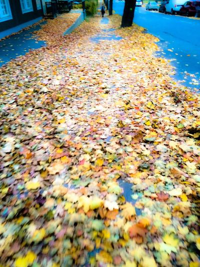 Eyeem Season EyeEm Gallery EyeEm Nature Lover All Sorts Of Colours Seasonscollection Seasons Colletion The Time Of Year Thetimeofyear Autum Weather Weather Photography Autumn Leaves Colorful Autumn Collection Autumn Colors Autum Nature Leaves_collection Leaves On The Ground
