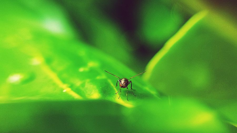 marco fly taking flight Insect Spider Close-up Animal Themes Green Color Web Water Drop Spinning Wire Wool Light Painting Chain Swing Ride Record Player Needle Prey Droplet Survival Spider Web Arachnid Jumping Spider Arthropod Animal Leg Leaf Vein Blooming Leaves Weaving