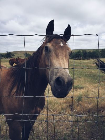 Horses On Grassy Field Seen Through Metallic Fence