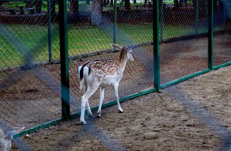Horse standing in zoo