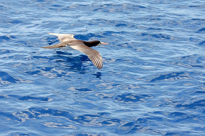 Albatros Animal Themes Animal Wildlife Animals In The Wild Bird Day Flying Low Flying Nature No People One Animal Outdoors Spread Wings Water Water Bird Waterfront